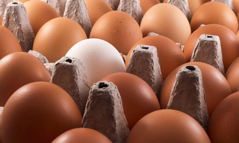 סוכלה הברחת ביצים ובשר לישראל