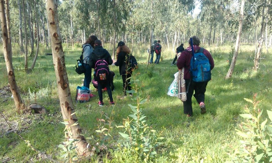 נתניה: צמח בסכנת הכחדה נשתל בחורשת הסרג'נטים