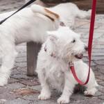 סיירת קקי הכפילה כמות הדוחות לבעלי כלבים שלא אוספים צואה