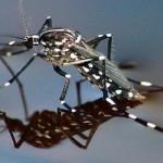 היתושים כבר כאן