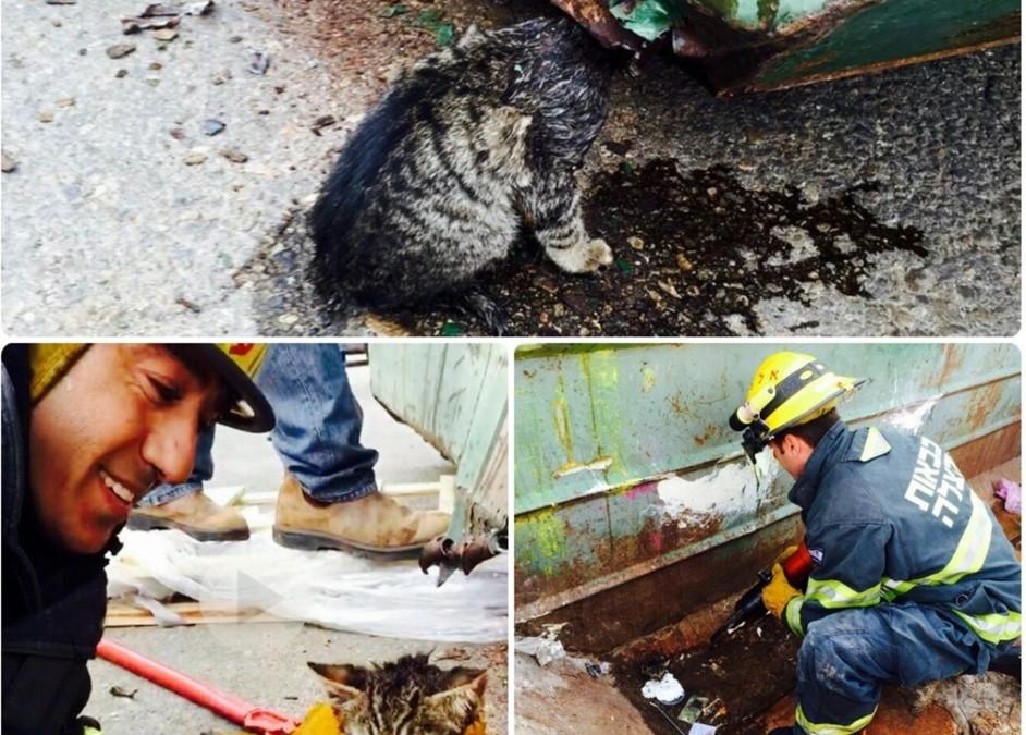 לוחמי אש חילצו גור חתולים שנלכד במכולת אשפה