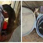 לוחמי אש חילצו גור חתולים לכוד