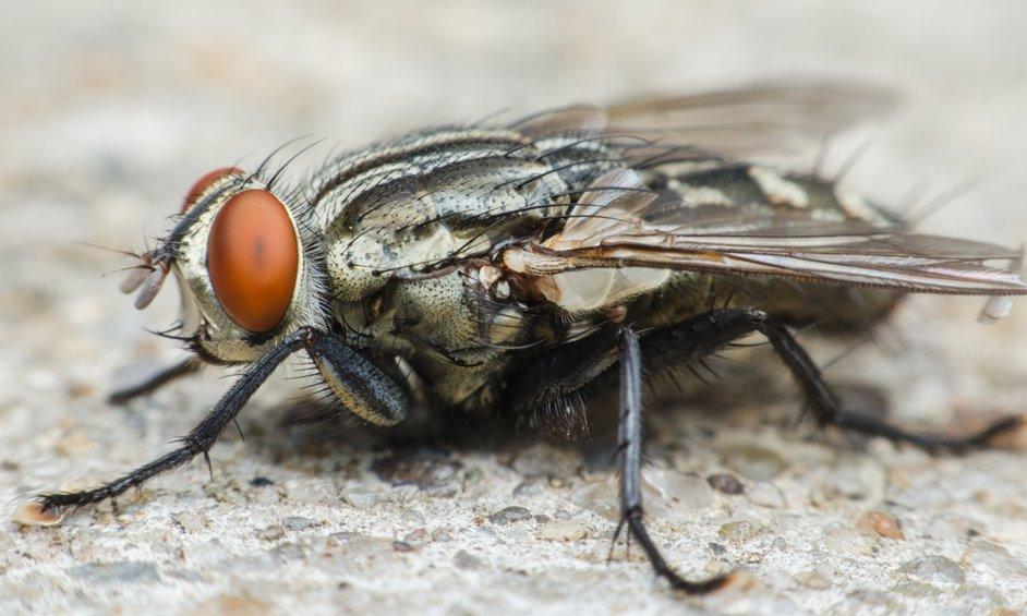 המשרד להגנת הסביבה: מכת זבובים וסירחון ביישוב קדימה