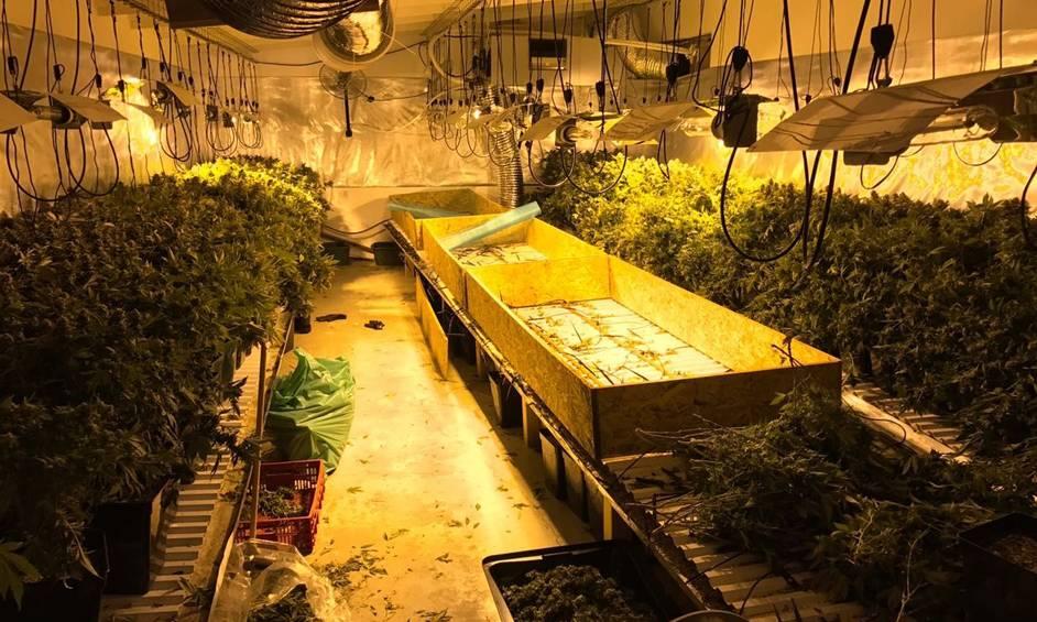 1250 צמחי קנאביס נתפסו במעבדת הידרו