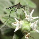כפר יונה: גידול חד בתלונות על ריבוי יתושים