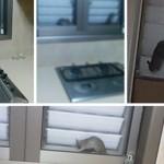 מתקפת חולדות בצפון נתניה – דיירים כלואים בבתים