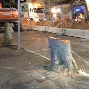 עץ כרות ברחוב הרצל. צילום נתי ריגלר