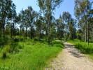 נתניה עיר ירוקה. צילום פלג אלקלאי